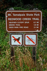 Mt. Tamalpais State Park - Back on the trail