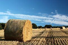 Summer Harvest. (Dave_Fowlie) Tags: blue light summer sky lines composition scotland harvest bales brechin