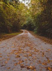 Euchee Creek Trail (Joshua Daniel Bailey) Tags: outdoor nature path fall autumn leaves orange hiking travel trees canon lightroom