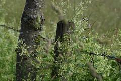 fence (Xtraphoto) Tags: fence hff zaun stacheldrahtzaun drahtzaun wiese meadow