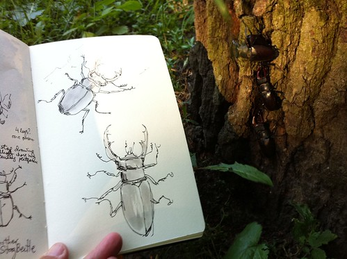 Tree full of Stag Beetles by apple-pine