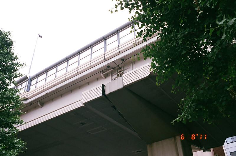 pigeonlove (6 of 13)