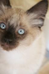 Hello, Kitty!