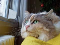 Minno =) (ardac) Tags: cat kitten kittens kedi sokak