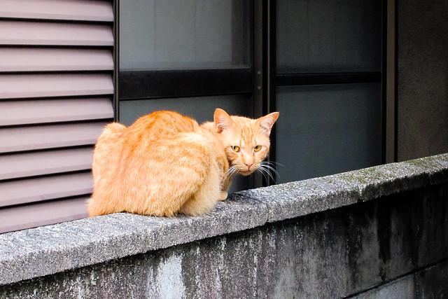 Today's Cat@2011-06-30