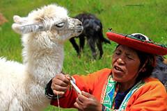 tra commercio e pastorizia (mat56.) Tags: portrait woman cuzco donna cusco perù lama ritratti cucciolo commercio pastorizia mat56
