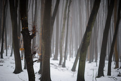 Beech Forest, Rgen, Germany (Xindaan) Tags: schnee winter white mist snow plant black tree nature fog forest germany geotagged outdoors deutschland grey buchenwald flora nikon europa europe day dof nebel natur pflanze 85mm grau overcast nopeople unesco depthoffield bosque alemania nikkor rgen wald 85 allemagne ruegen baum unescoworldheritage schwarz beech fort d3 germania worldheritage bosco schrfentiefe foresta buche mecklenburgvorpommern  weis 2011 rugen tiefenschrfe 8514 beautyinnature jasmund beechforest nonurbanscene nationalparkjasmund coldtemperature weltnaturerbe d3s afsnikkor85mm114g primevalbeechforest