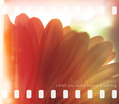 Happy dreaming (photopdw) Tags: olympus gerbera xz1