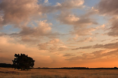 **Sunset at the Veluwe** (**klaracolor**) Tags: trees sunset summer sky cloud sun sunlight holland tree nature dutch clouds canon landscape evening nationalpark nederland thenetherlands gelderland canonef24105mmf4lisusm canoneos40d canon40d klaracolor