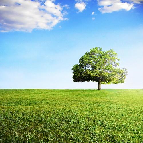 フリー写真素材, 自然・風景, 樹木, 草原,