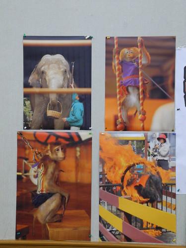 大象提籃子?猴子盪鞦韆?豬隻跳火圈?哪一項你也想做做看?