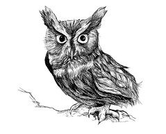 Screetch (monkeyworks illustration) Tags: owl owldrawing davemott screetchowl wildlifeillustration owlillustration