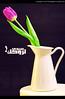 !لِروُحكْ سَيدِي (✿ SUMAYAH ©™) Tags: flower canon photography eos edmonton وردة سيدي 550d sumayah platinumheartaward لروحك فلكرسمية المصورةسمية سميةعيسى