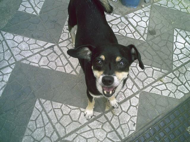 Papudinho (?-2012) large image