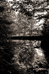 At The Tarn (Isengardt) Tags: trees bw reflection tree nature pool leaves sepia ditch laub natur bach sw tarn bltter bume baum stetten reflektion murr tmpel rems rommelshausen remstal remsmurr