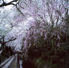 94730005 (Darjeeling_Days) Tags: hasselblad 京都 中判 プロビア