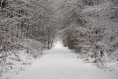 ckuchem-1625 (christine_kuchem) Tags: baumrinde buche bume eiche eis frost hainbuche natur pfad pflanzen ruhe samen spuren stille struktur wald weg wildpflanzen winter einsam kalt schnee ste
