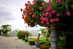 PLW_5530 (Laszlo Perger) Tags: wien vienna sterreich austria blumengarten hirschstetten flowergarden