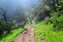 Los caminos de la vida... (San.Mart) Tags: verde camino naturaleza nature rayosdesol chileflickr