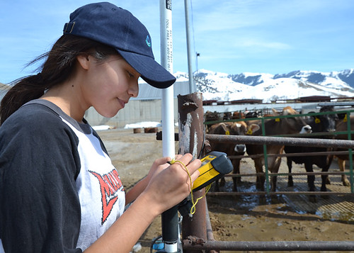 Utah State University Engineering Student Semira Crank spent her spring break surveying animal waste management systems on dairy farms near Logan, Utah, as a temporary student employee with the USDA Natural Resources Conservation Service.