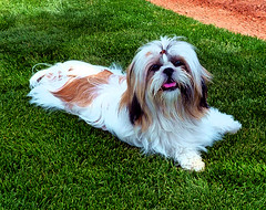 mojo casa grande arizona llgorman pet art portraits