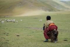 - (Fred Crane) Tags: deleteme5 boy deleteme8 deleteme deleteme2 deleteme3 deleteme4 deleteme6 deleteme9 deleteme7 saveme deleteme10 goat tibet tibetan sichuan