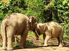 コタキナバル市内と自然動物パーク観光