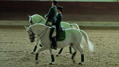 "Lipizzaner Dressage <a style=""margin-left:10px; font-size:0.8em;"" href=""http://www.flickr.com/photos/64637277@N07/5890339167/"" target=""_blank"">@flickr</a>"