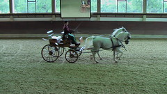 "Lipizzaner Dressage <a style=""margin-left:10px; font-size:0.8em;"" href=""http://www.flickr.com/photos/64637277@N07/5890340149/"" target=""_blank"">@flickr</a>"