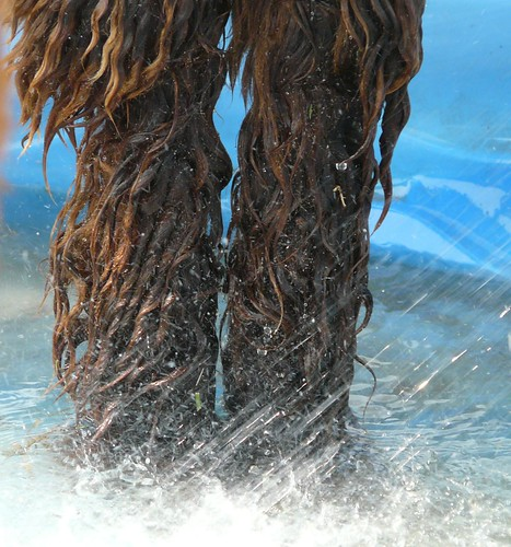 Legs pool_0395