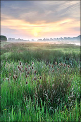 Return to Waltham Brooks. (John Dominick) Tags: mist west grass sunrise downs landscape sussex wildlife south reserve trust upright waltham brooks teasles