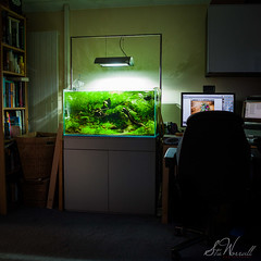 IAPLC entry for 2012 (Stu Worrall Photography) Tags: ada entry 2012 aquascape plantedtank 90p stuworrall iaplc 90x45x45