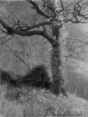 Early Spring (wildjones) Tags: paper kodak 11 grade printing proof split toned eco developed printed selenium hie id11 silverprint moersch 4812