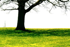 (Parisa Yazdanjoo) Tags: shadow tree green