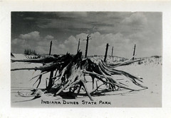 Indiana Dunes State Park, circa 1940 - Chesterton, Indiana (Shook Photos) Tags: statepark beach sand postcard dunes indiana driftwood stump postcards beaches recreation chesterton indianadunes indianadunesstatepark portercounty chestertonindiana postcardfolder postcardfolders