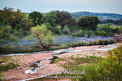 Hill Country Stream and Bluebonnets