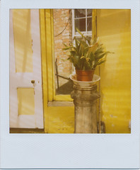 Plant on a Pedestal (Pictures from the Ghost Garden) Tags: plants film yellow polaroid 600 integral instant expired instantcamera onestep plantsandflowers instantfilm one600ultra roidweek2014