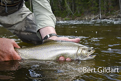BigholeBrookTrout-4