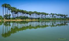 .... (VG Karthikeyan Photography) Tags: india reflection nature landscape paintings tamilnadu thirnelveli