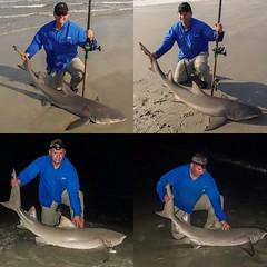 Shark fishing (pmcdonald851) Tags: beach ga georgia shark fishing olympus penn sharks casting mag surffishing tiburon 545 lemonshark knobby daiwa surfcasting pennreels catchandrelease saltiga oceanmaster olympustough teamdaiwa tg620 penn545