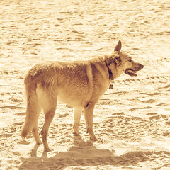 IMGP3381 (jamin.sandler) Tags: pentaxistds palmachimbeach promasterspectrum728210mmf4265 dog