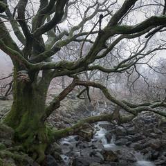 keswick 1 (H o g n e) Tags: uk england britain cumbria lakedistrict keswick winter snow tree creek fellowship fog mist explore explored lakedistrictnationalpark 4k