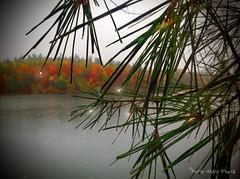 Sous la pluie ... ( P-A) Tags: automne parcdelagatineau pluie lac eau forest arbres couleurs dcor majestueux fiert nature visiteurs photos simpa lacpink