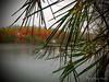 Sous la pluie ... ( P-A) Tags: automne parcdelagatineau pluie lac eau forest arbres couleurs décor majestueux fierté nature visiteurs photos simpa© lacpink