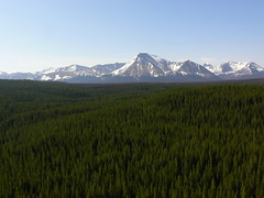 Willmore Wilderness Park (Alberta Parks) Tags: willmore wilderness area vast trees mountains forest snow mountain pine aerial willmorewildernesspark protectedarea alberta backcountry
