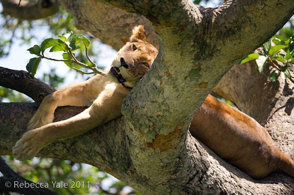 RYALE_Rwanda_Uganda_Safari-304