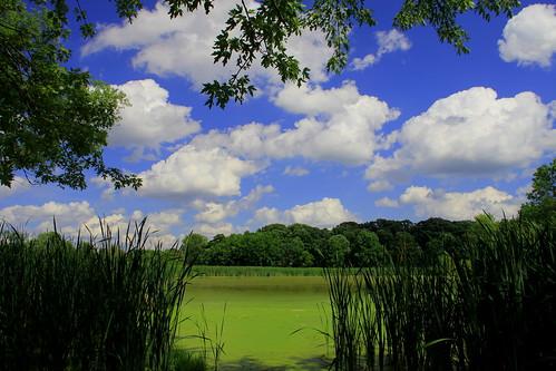 Lincoln Marsh, June 16, 2011: Heightened Wonder Vista