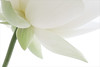 Lotus Flower - IMG_4569-1000 (Bahman Farzad) Tags: flower macro yoga peace waterlily lotus relaxing peaceful meditation therapy lotusflower lotuspetal lotuspetals lotusflowerpetals lotusflowerpetal