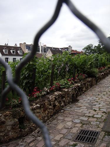 Le vignoble du Clos Montmartre