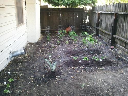 Our garden 2011